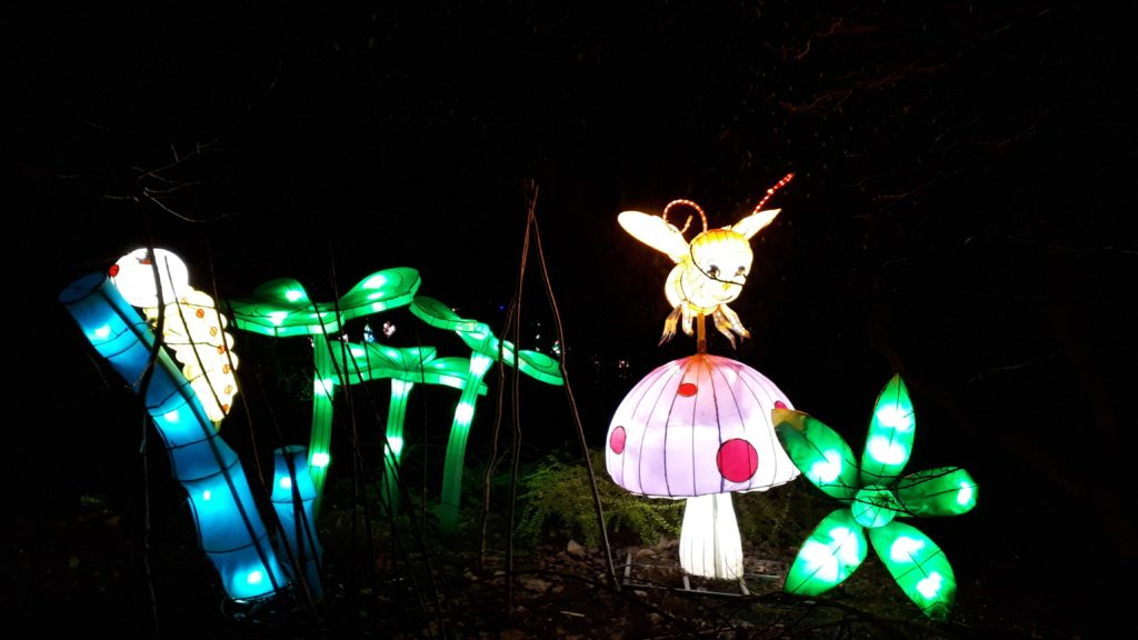 Birmingham Magic Lantern Festival - plants and insects