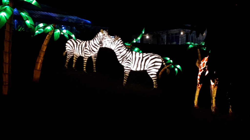 Birmingham Magic Lantern Festival - zebra and palm trees